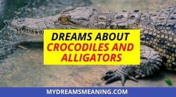 Dreams About Crocodiles And Alligators Dream Interpretation