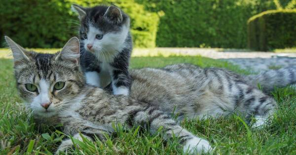 Cats and Kittens Dream Meaning (1)