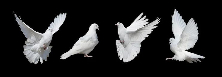 Dove Dream Meaning