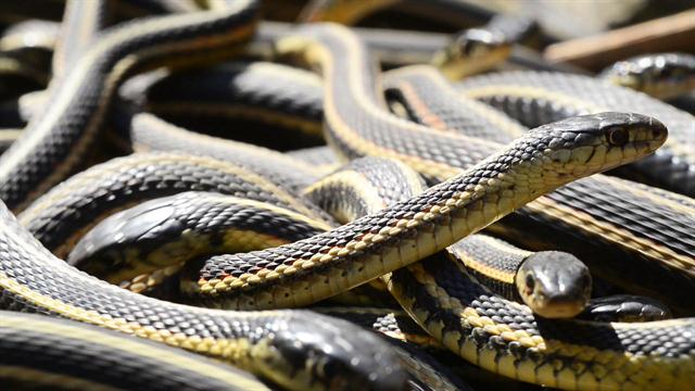 Snakes Everywhere Dream Meaning