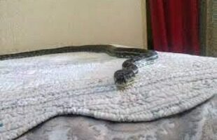 Snakes in Bed Dream Meaning